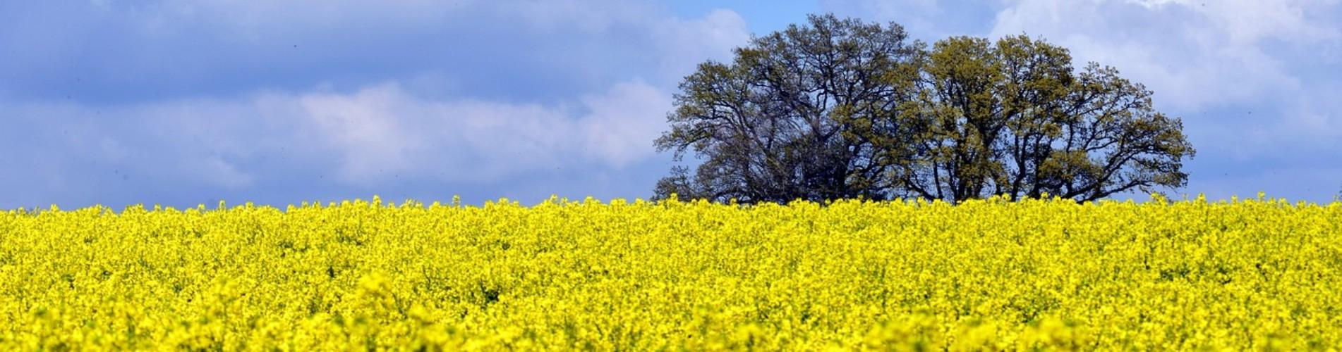 Endlich Frühling..... - Zeit für Faltmarkise.de